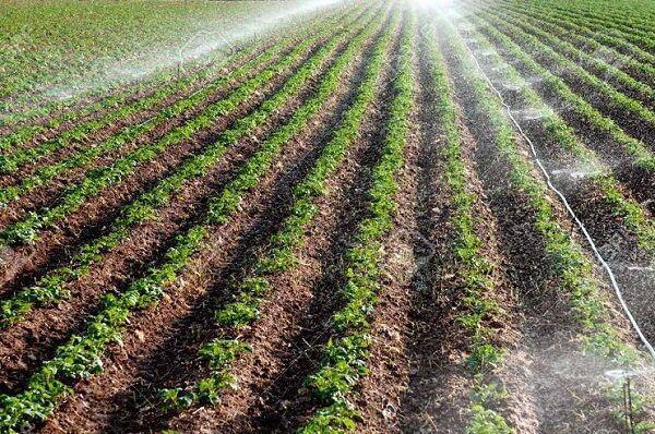 خبرنگاران هدف گذاری افزایش 15 درصدی تولیدات کشاورزی در خراسان جنوبی